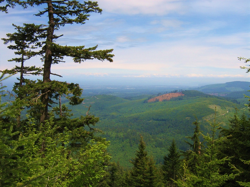 Overlooking a reforested area near the Olymic National Park