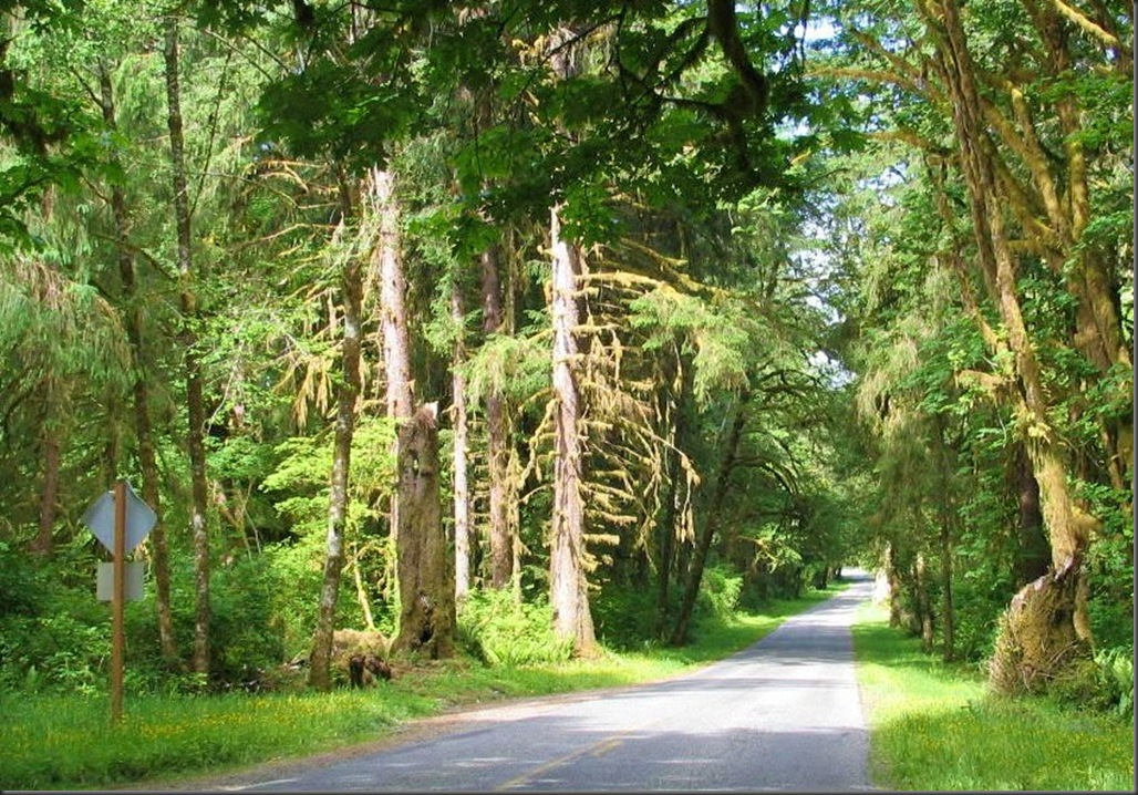 Road through the forset in olympic national park