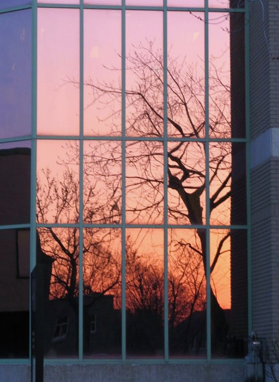 Tree reflected in window glass