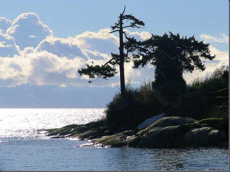 clouds, trees, and ocean Victoria BC