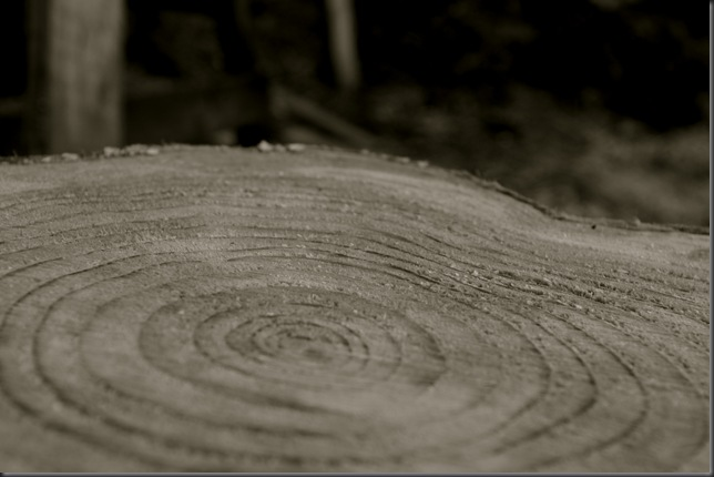Growth rings on a stump