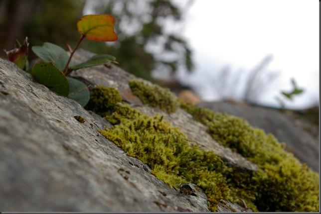 Matthews view of the lichen
