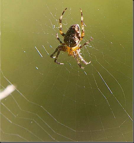 Spider & web[1]