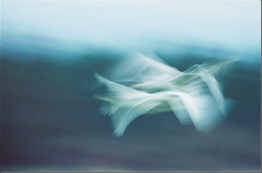 Swan Abstract - Charles Brandt