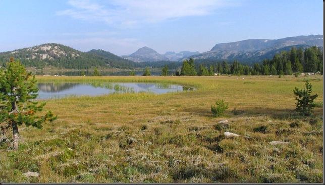Alpine Meadows of the Beartooth Range