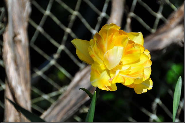 Spring bulb