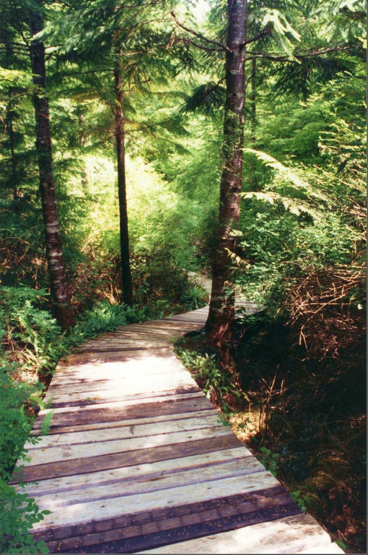 Our old boardwalk - Bruce Witzel photo