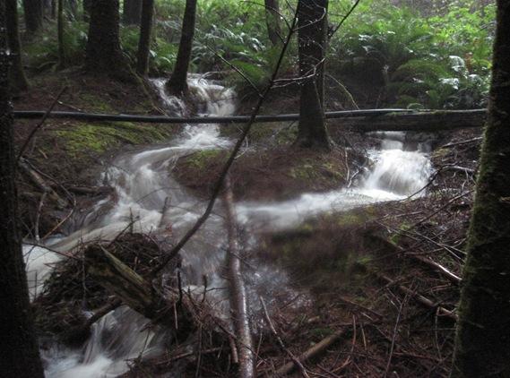 Penstock trail - Bruce Witzel photo