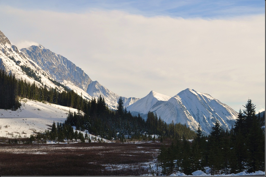 Highwood Meadows, Kananaskis Country - Bruce Witzel photo