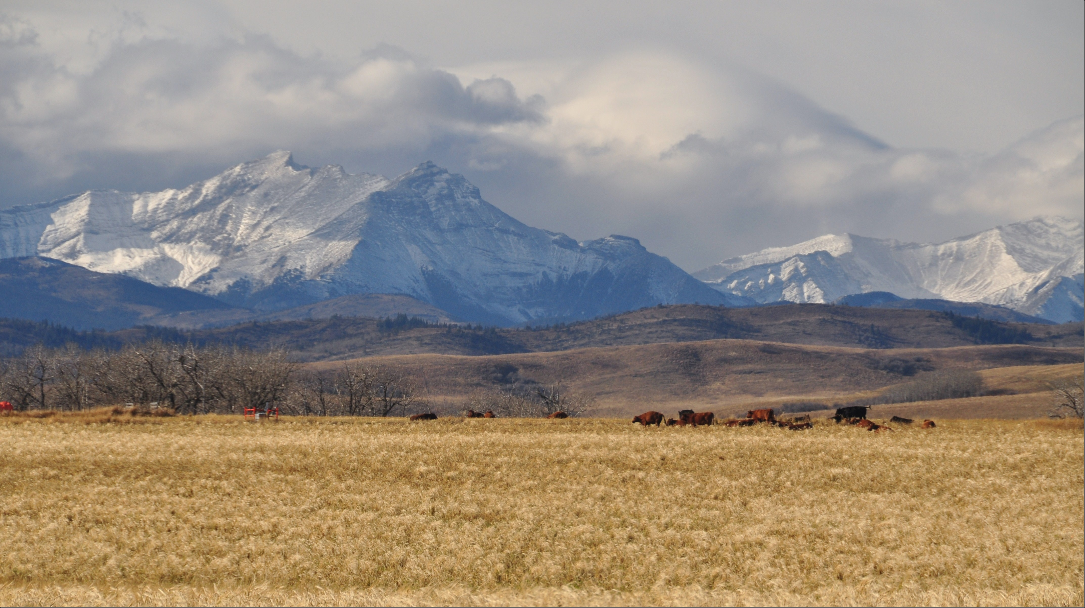 Looking west off Alberta Highway 22 - the cowboy trail - Bruce Witzel photo