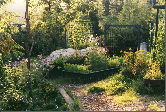 Our garden in the 90's - bruce witzel photo
