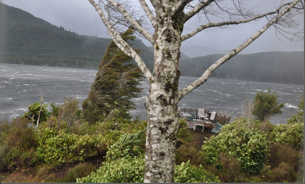 Vancouver Island storm as seen from our window - bruce witzel photo