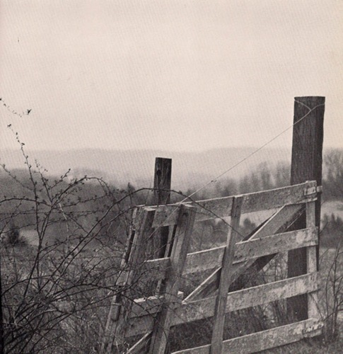 fence - photo by thomas merton