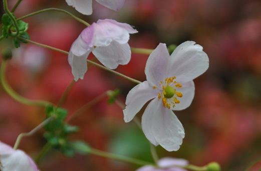 Kohan Reflection Garden 2 - Bruce Witzel photo