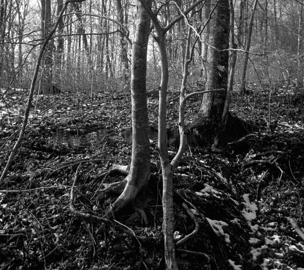 Roots, snow and branches  - photo by thomas merton