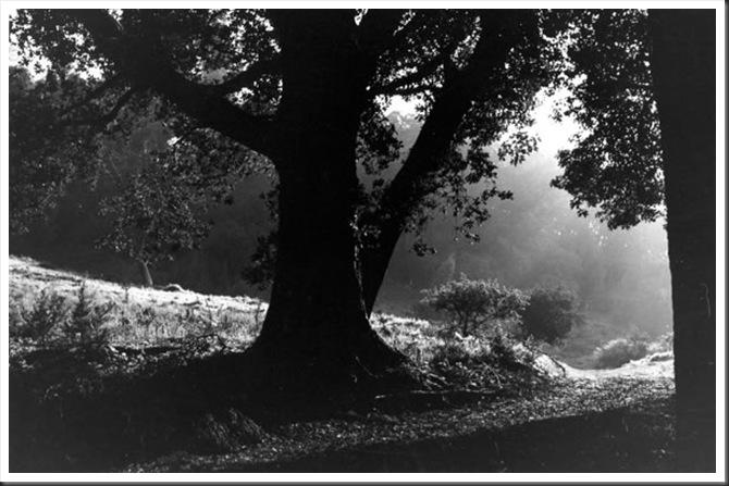 tree - photo by thomas merton