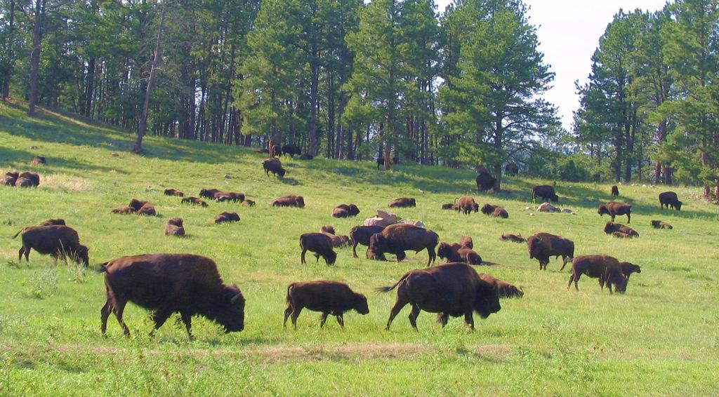 The Sacred Black Hills of the Dakota - bruce witzel photo