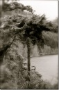 A tree - Matthew Keeley - photo