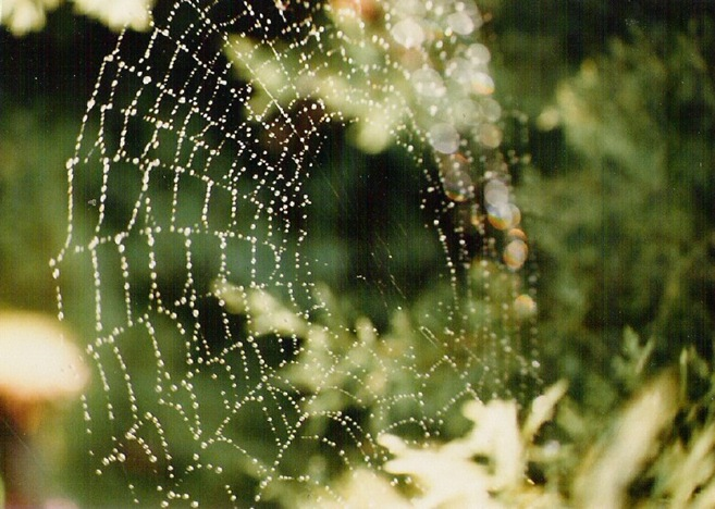 Spiderweb - photo by Mac Witzel