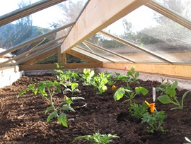 Solar powered cold frame, May 31-2015 -bruce witzel photo