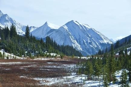 Highwood Meadows - Bruce Witzel photo