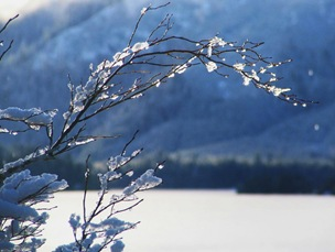 Ice on a branch at the lake - bruce witzel photo