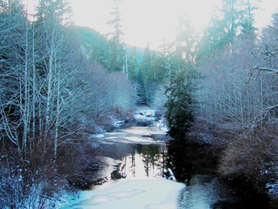Near Holberg, British Columbia - bruce witzel photo