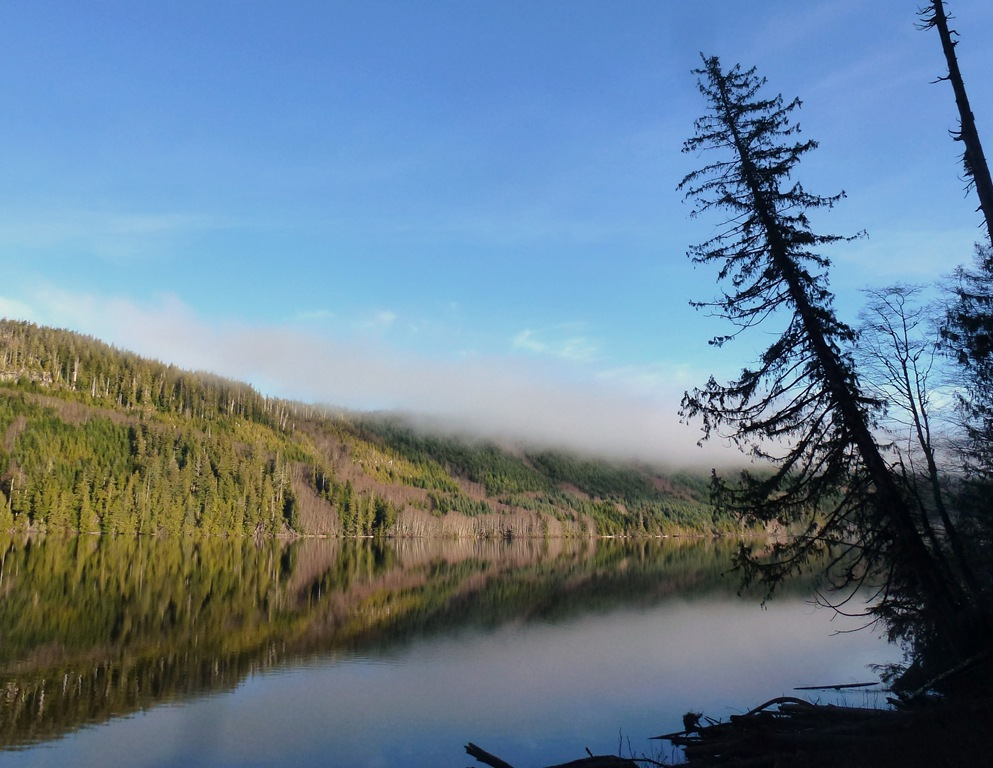 Vancouver Island Lake on a calm day, with red alder trees in bloom - bruce witzel photo