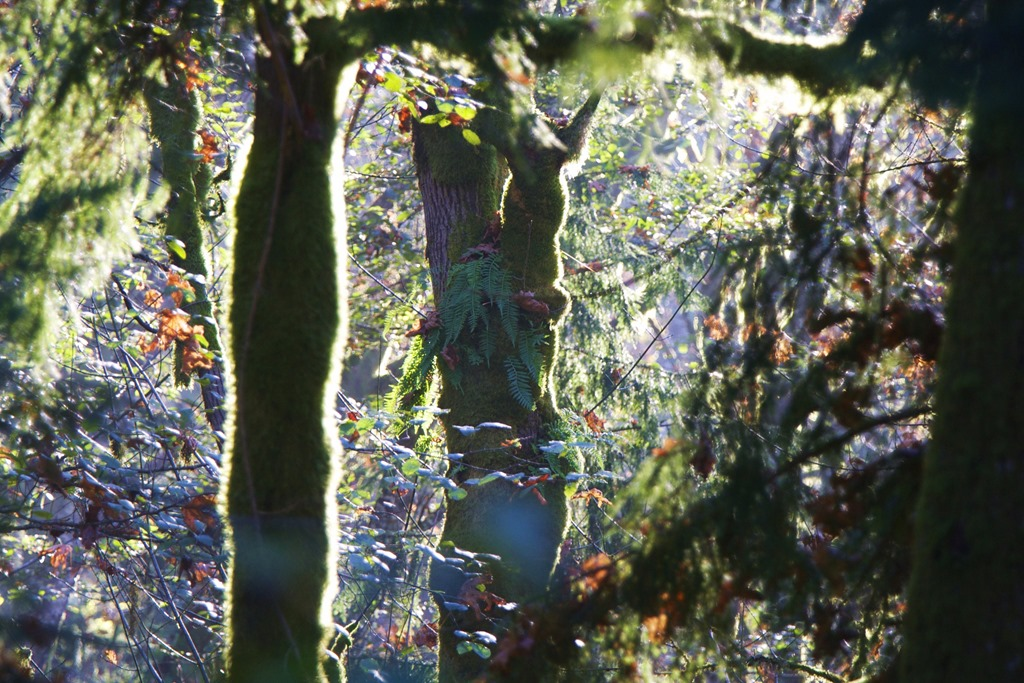 Charles Brandt forest photo (2)