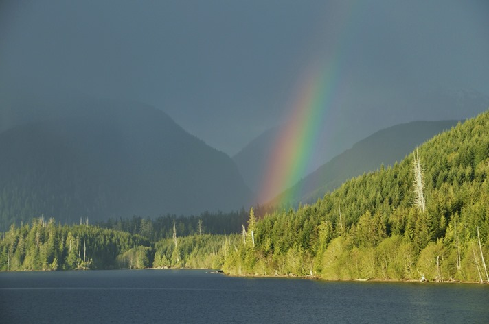 Book Cover for  The Light Never Lies by Francis Guenette - photo taken on Northern Vancouver Island by Bruce witzel