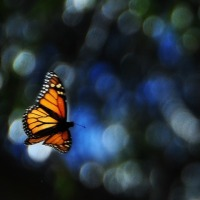 FELLOW EARTHLINGS… WE NEED METAMORPHOSIS! (the unsettling numbers)