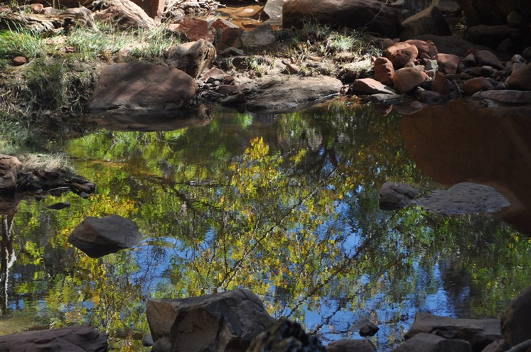 Emerald pond reflection at Zion national park - bruce witzel photo