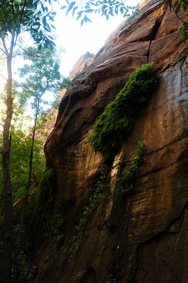 Hanging Gardens at Zion National Park Utah - bruce witzel photo