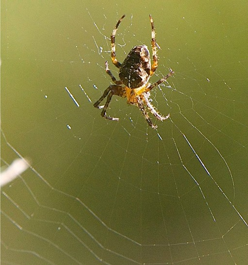 Spider & web (2) - charles brandt photo