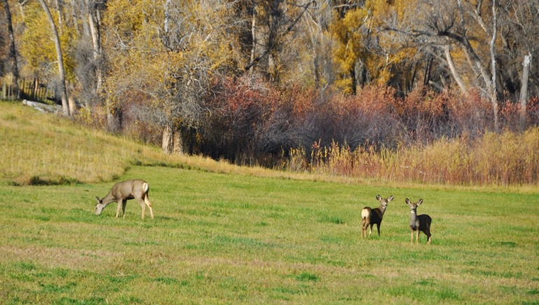Wildlife near Carbondale, Colorado 2 - bruce witzel photo