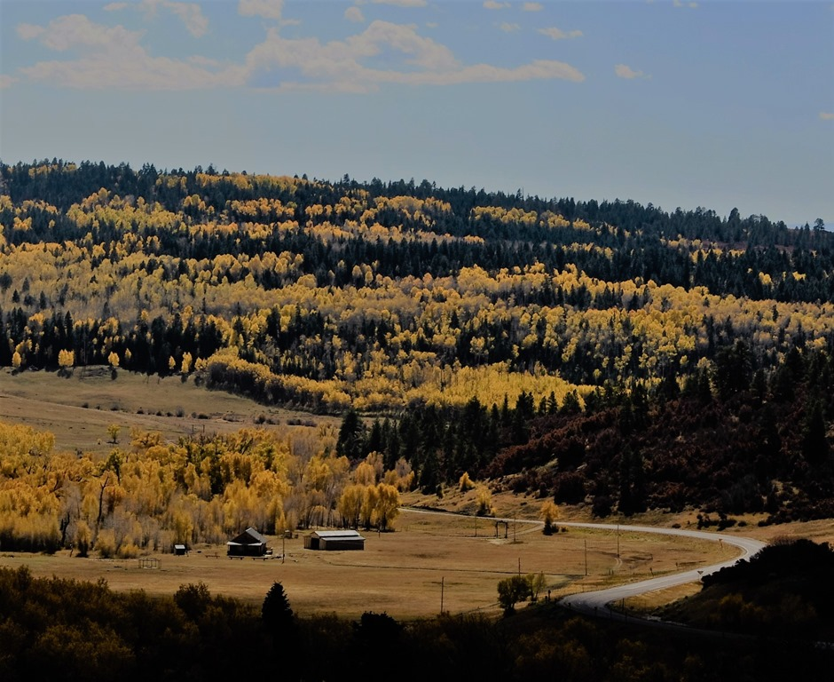 Carson National Forest, New Mexico fall colour 2016 (4) - bruce witzel photo