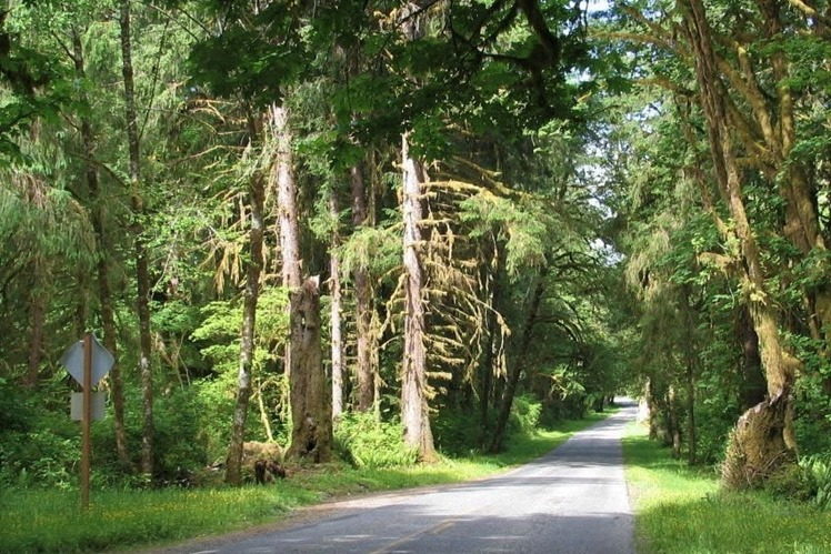 Road on the Olympic Peninsula, Washington State - bruce witzel photo (2)