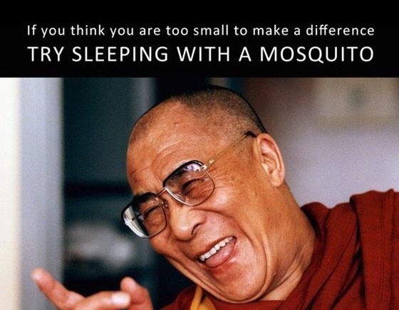 Dalai Lama - think of a mosquito