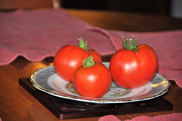 Fressh tomatoes from our garden Aug. 16, 2017 - bruce witzel photo