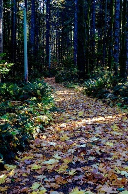 Peek in the forest, Nov. 2-2017 - Chalres Brandt