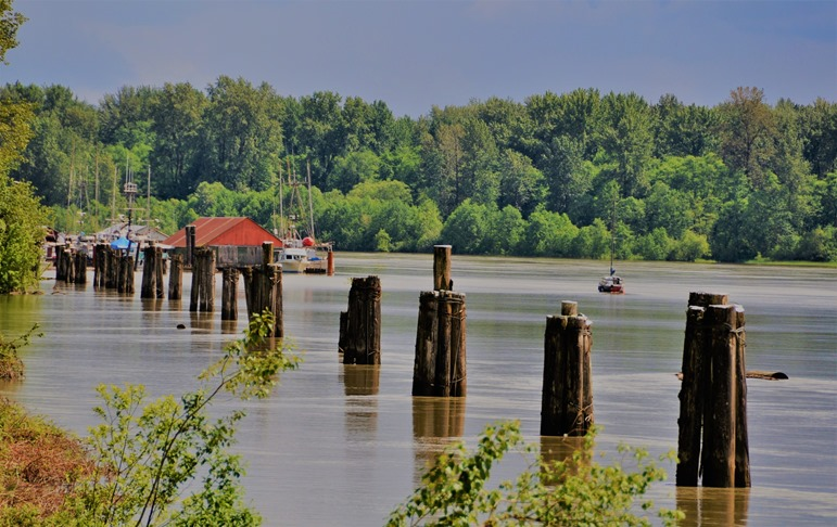 Old piers on the mighty Fraser River - bruce witzel photo (2)