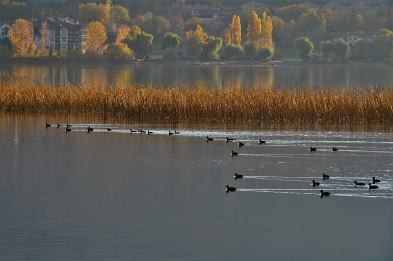 Osoyoos Lake Bird Sanctuary (2) Oct 21-2018 - bruce witzel photo