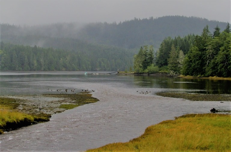 Winter Harbour estuary, north-west coast Vancouver Island May 5-2016 - bruce witzel photo