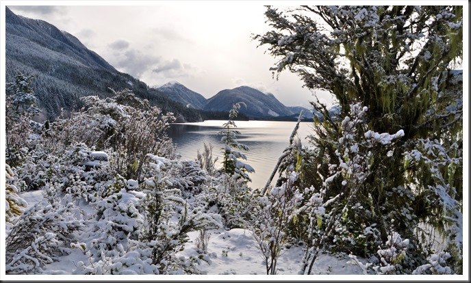 Snow and the lake and old mans beard lichen, feb 16-2019 - bruce witzel photo