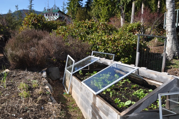 Coldframe on April 1, 2019 - bruce witzel photo