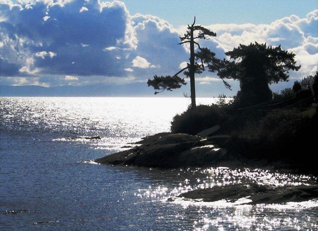 clouds, trees, ocean - bruce witzel photo (3)