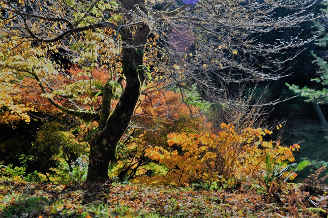 Fall Colour at Ronning Garden 3 - bruce witel photo
