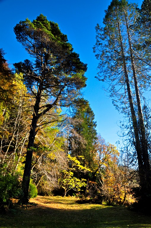 Tall trees at Ronnings Garden Oct 26, 2019 - bruce witzel photo