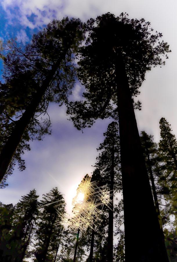 Big trees California 2010-05-21 bruce witzel photo