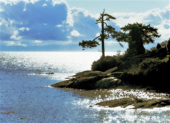 clouds trees ocean - bruce witzel photo